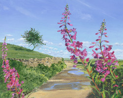 Rose Bay Willow Herb at Windemere, Cumbria
