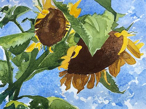 Sunflowers XVIII