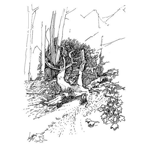 Fallen Tree II