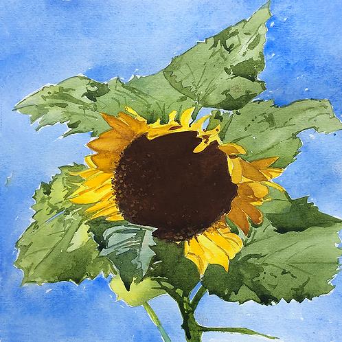 Sunflowers III