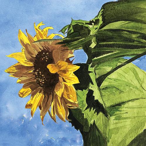 Sunflowers XIII