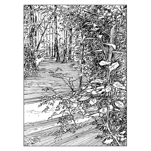 Path Through Jubilee Wood I