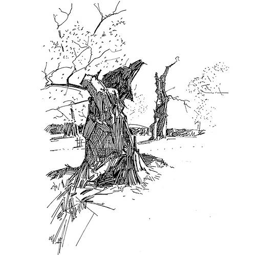 Tree Trunk, Bradgate Park II