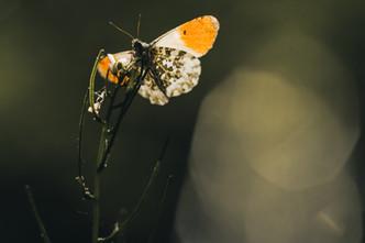 Sortie Macro/Nature