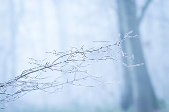 Un hiver en forêt