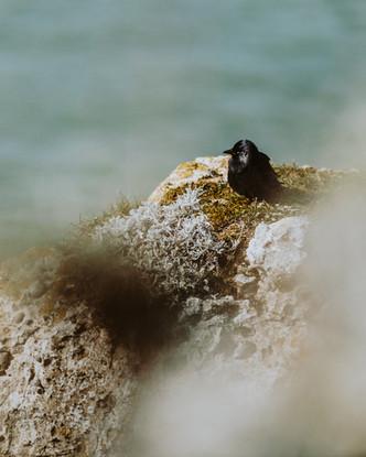 Bivouac sur de la Côte d'Opale