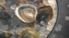 Oysters 06.jpg