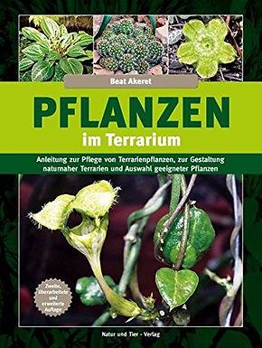 Planzen im Terrarium 2.jpg