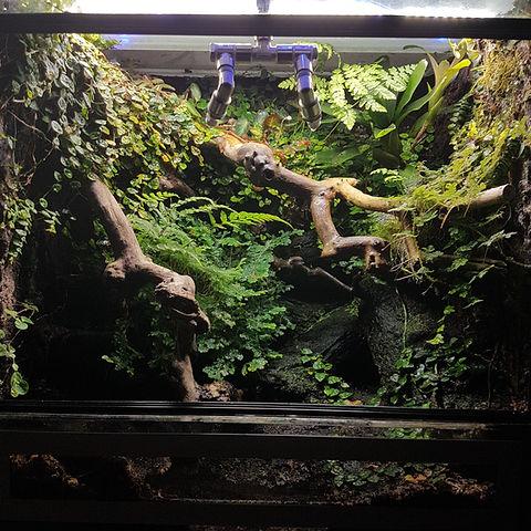 Dendrobaten Terrarium