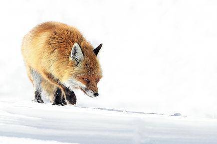 Photo prise par Thierry Barra.jpg