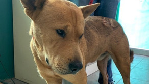 A friendly dog in need of help