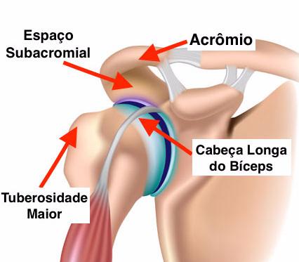 Cabeça longa do bíceps
