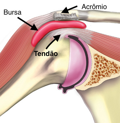 Anatomia da região do ombro