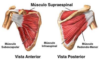 Músculos do manguito rotador