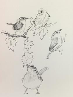 #14 Wren Drawings