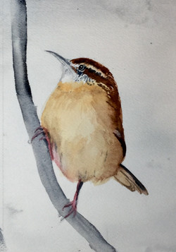 #22 Another Wren on a Branch