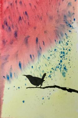 #18 Colorful Wren