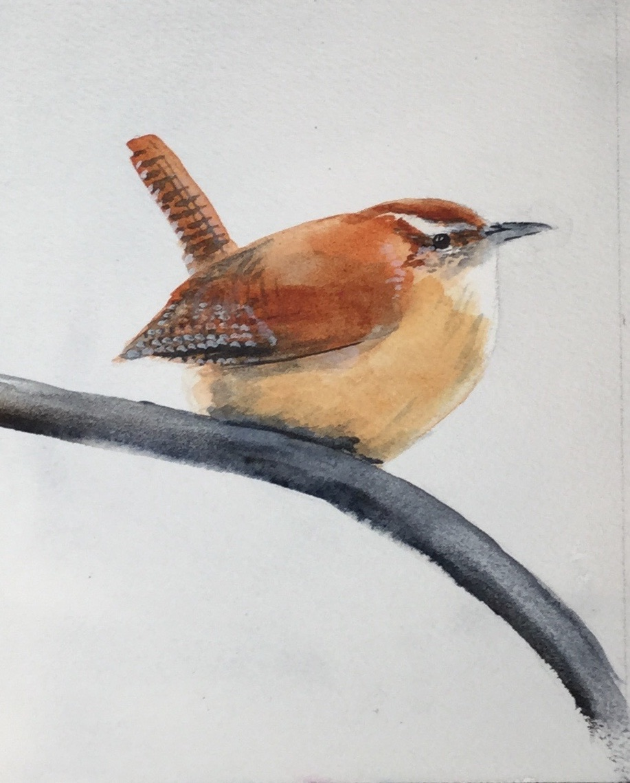 #21 Wren on Branch