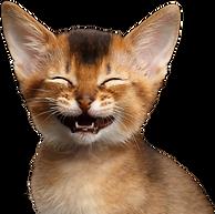 笑う猫.png