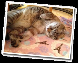 猫が飼えない 預かり 猫 老猫ホーム 終生飼養 施設