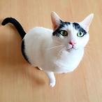 猫 飼えない 飼えなくなった 猫 終生飼養 預かり 飼えない 引取り 老猫ホーム