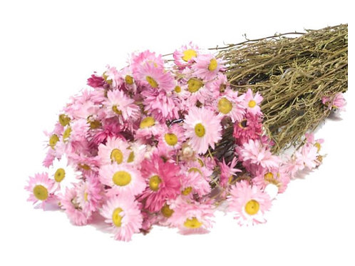 Dried Acrolinium Natural Pink Bunch
