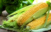 kukuruza-polotentse-pochatki.jpg