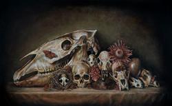 Vanitas with Horse Skull