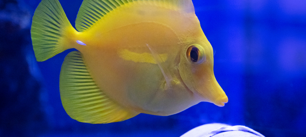 ColorfulFish.jpg