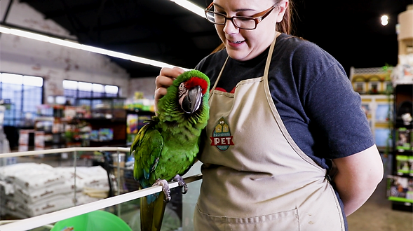 A pet store employee strokes a green macaw.