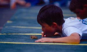 toad jump3.jpg