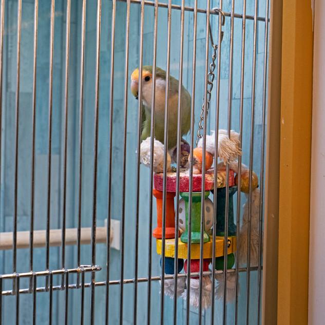 Parrot.jpg