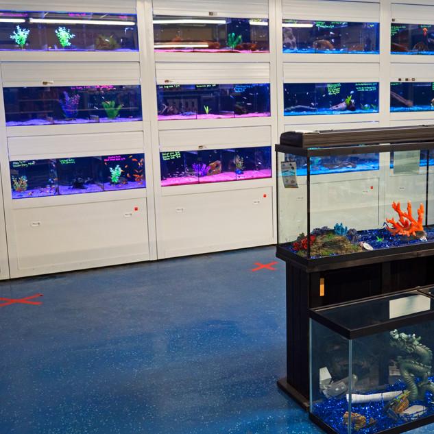 FishTanks.jpg