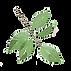 illust_leaf7.png