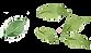leaf_5mai.png