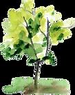 illust_tree.png