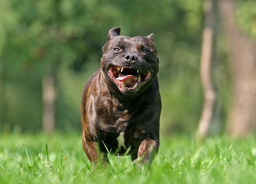 Искусавшую ребенка в харьковском парке собаку усыпят