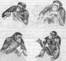 Эволюция разумного поведения: от элементарного мышления животных к абстрактному мышлению человека.