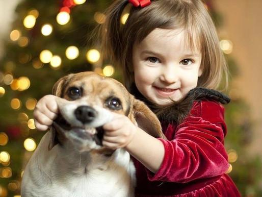 Собака и малыш: подготовка к сближению
