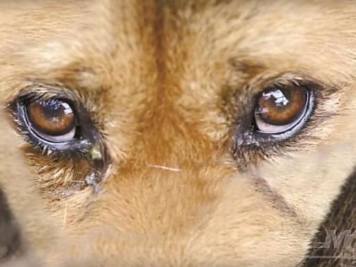 «Собака умирает в страшных конвульсиях...»
