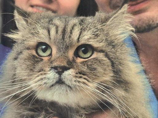"""""""Не кот живет в вашем доме, а вы - в его"""""""