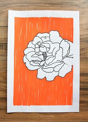'Orange rose'