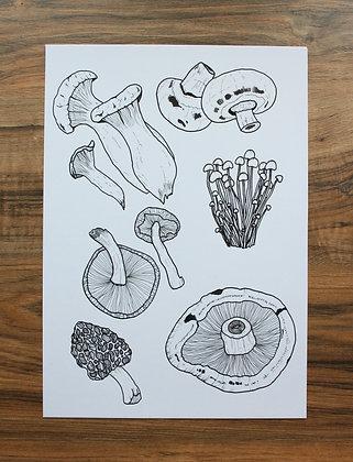 'Edible Mushrooms'