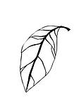 leaf wix.png