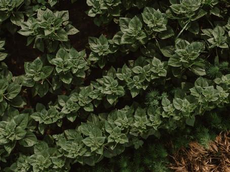 Növényi stressz tényezők
