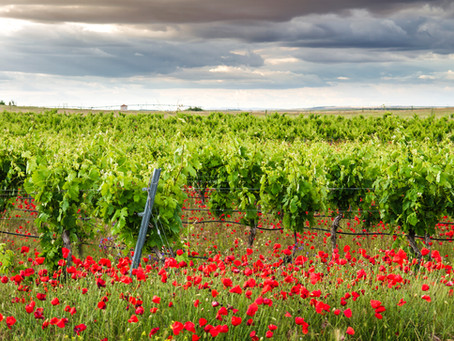 TYTANIT® - Védjegyzett életfolyamat stimulátor a fenntartható szőlőtermesztésben