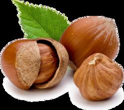 Filberts/Hazelnuts