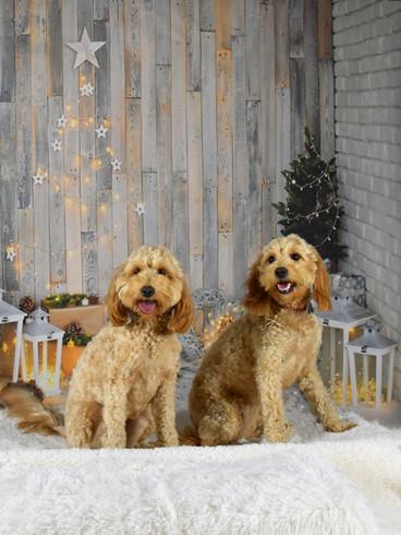 Pups 1.jpg