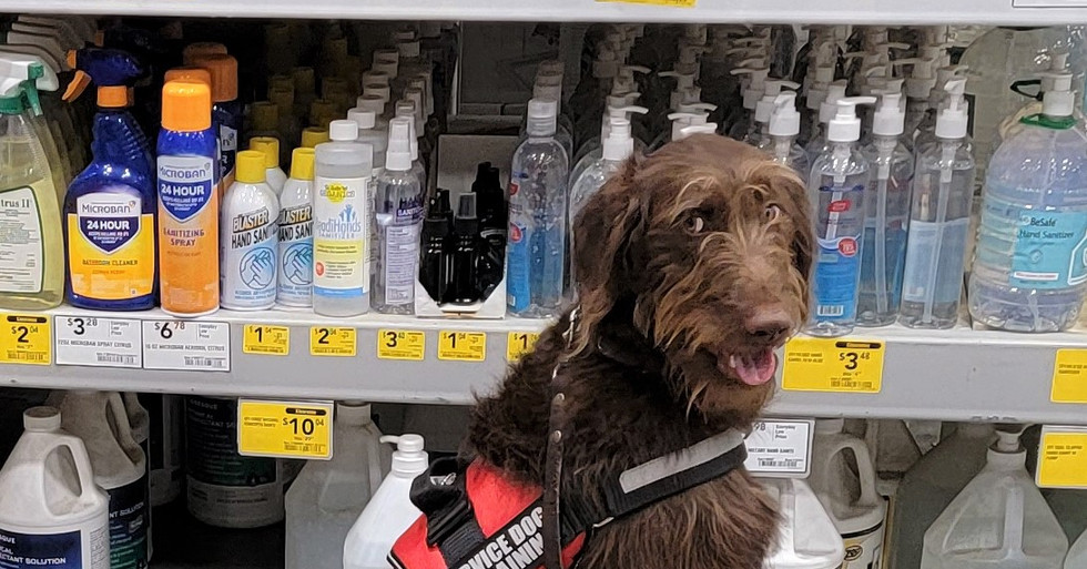 Charlie at Lowes