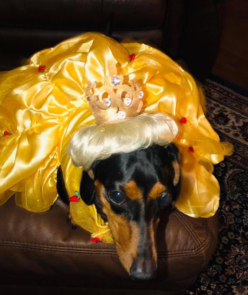 Millie Halloween.jpg